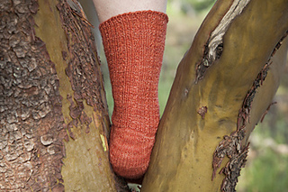 Minnesota_heel_back_small2