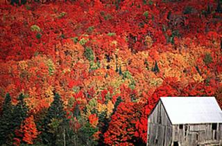 Fall-foliage_small2