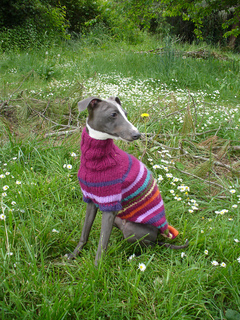Puppies_with_sweaters_025_small2