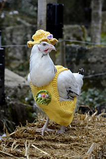 Chicken_yellow_coat_small2