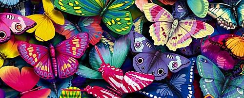 Butterflies-yorkshire_rose-15990936-1280-960-940x380_medium
