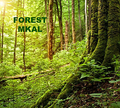 Forest_mkal_pm_500_small