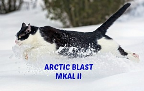 Arctic_blast_mkal_ii_cat_medium