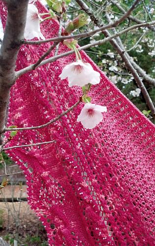 Pink_close_2_medium