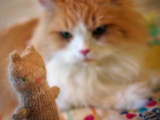 Kitties_small2