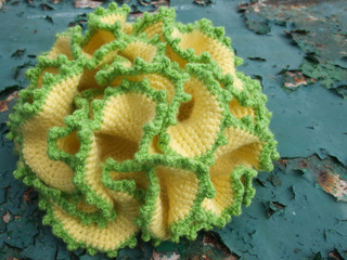 Cauliflower_coral_1_small2