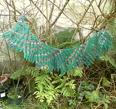 Fungi_forest_feathers_blocked2_photo2285_small