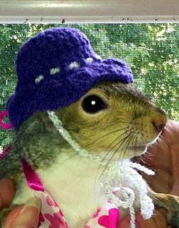 Tikipoo_luvs_her_hat_small2
