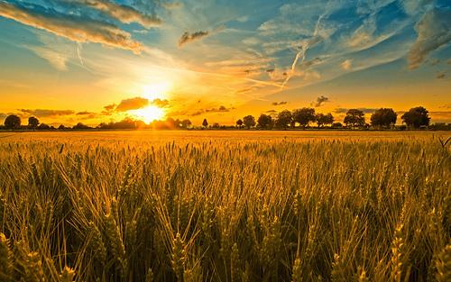 Waiting-for-a-harvest_medium