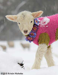 White_lamb_pink_coat_front_small_small2