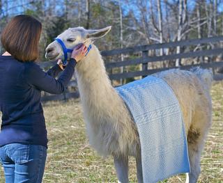 Bramble_on_llama_2_small2
