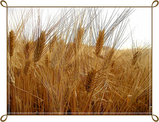 Grano-trend-496x372-bis-frame_small2