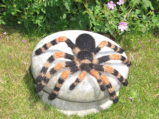 My_pet_tarantula2_small2