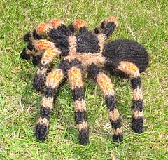 My_pet_tarantula3_small