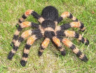 My_pet_tarantula4_small2