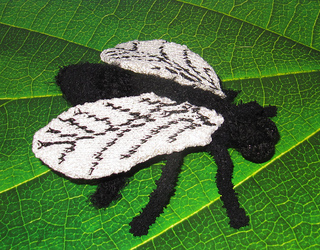 Not_so_common_house_fly_by_madmonkeyknits5_small2