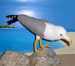 My_pet_seagull1_small