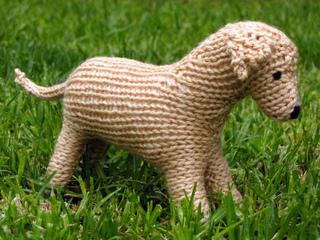 Labrador_dog_6_small2