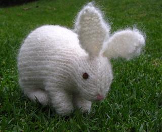 Rabbit1_small2