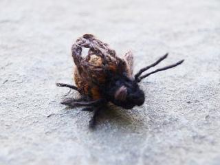 Bee2_hannahhaworth_small2