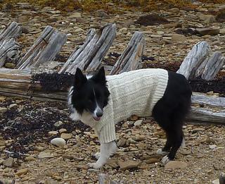 Sea_dog_gansey05_small2