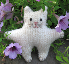 Cat_front_small